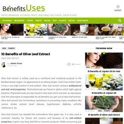 10 Benefits of Olive Leaf Extract