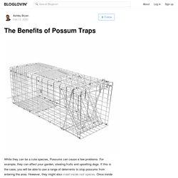 The Benefits of Possum Traps