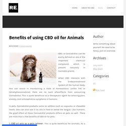 Benefits of using CBD oil for Animals