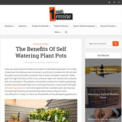 The Benefits Of Self Watering Plant Pots » One Page Review