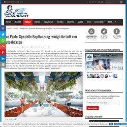 Sao Paulo: Spezielle Bepflanzung reinigt die Luft von Autoabgasen