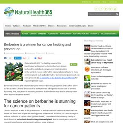 Berberine shown to stop cancer cell growth