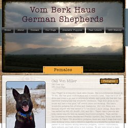 Vom Berk Haus German Shepherds