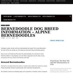 Bernedoodle Dog Breed Information - Alpine Bernedoodles - Affordable Pet Care