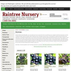 Fruit Trees, Berries, Nuts, Ornamentals, Raintree Nursery