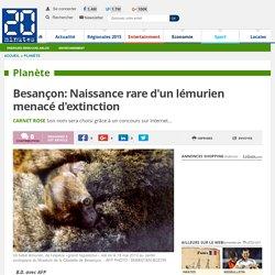 Besançon: Naissance rare d'un lémurien menacé d'extinction
