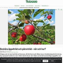 Beskära äppelträd och päronträd – när och hur?