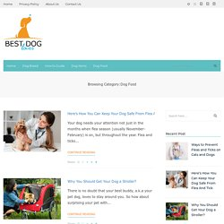 Best Adult Dog Food Review in 2020