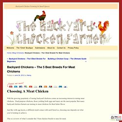 5 Best Breeds For Meat Chickens