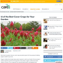 12 Of The Best Cover Crops For Your Garden