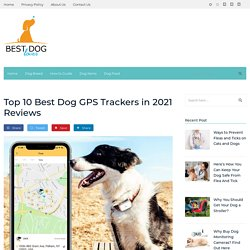 Best Dog GPS Trackers 2020