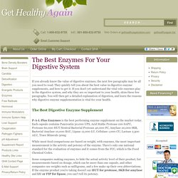 The Best Enzymes For Your Digestive System