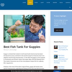 Best Fish Tank For Guppies - New 2021