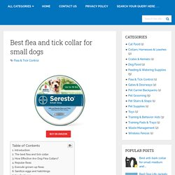Best Flea And Tick Collar For Small Dogs