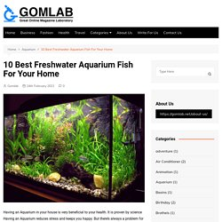 10 Best Freshwater Aquarium Fish For Your Home