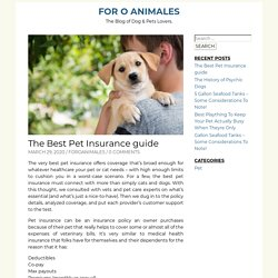 The Best Pet Insurance guide – For O Animales