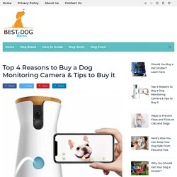Best Dog Monitoring Camera for Sale