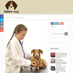 Best Options to Get Rid of Dog Fleas