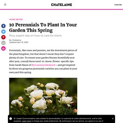 The best perennials to plant in Canada