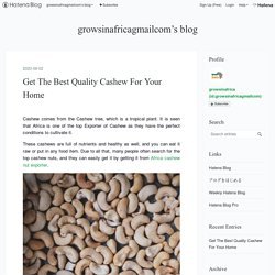 Get The Best Quality Cashew For Your Home