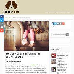 Best Shortcut Ways to Socialize a Dog