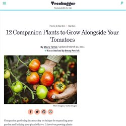 12 Best Tomato Companion Plants