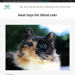 best toys for blind cats