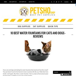10 Best Water Fountains For Cats and Dogs – Reviews