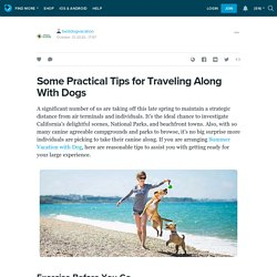 Some Practical Tips for Traveling Along With Dogs