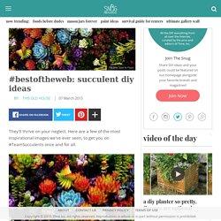 #bestoftheweb: succulent diy ideas - The Snug