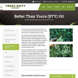Better Than Yours (BTY) OG - Trees Sixty Nursery