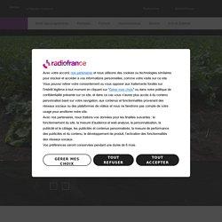 FRANCE CULTURE 25/08/20 DE CAUSE A EFFETS - Betterave à sucre avec ou sans néonicotinoïdes ?