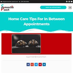 Home Care Tips For In Between Appointments
