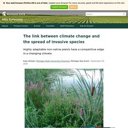 MICHIGAN STATE UNIVERSITY 25/09/15 The link between climate change and the spread of invasive species - Highly adaptable non-native plants have a competitive edge in a changing climate.