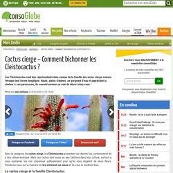 Cactus cierge - Comment bichonner les Cleistocactus ?