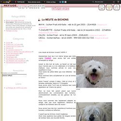 La MEUTE de BICHONS - Le blog du Refuge de l'Arpa - Adoptions chiens et chiots - Protection Animale SPA
