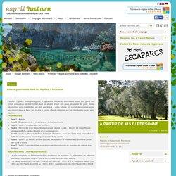 Balade gourmande dans les Alpilles, à bicyclette - Ecotourisme PACA
