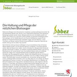Die Haltung und Pflege der nützlichen Blutsauger - Blutegel in Hessen kaufen - BBEZ Biebertaler Blutegelzucht