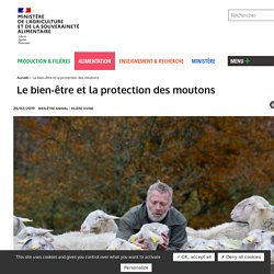 MAA 28/02/19 Le bien-être et la protection des moutons
