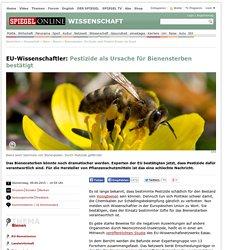 Bienensterben: EU-Studie sieht Pestizid-Einsatz als Grund