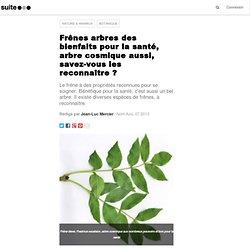 Frênes arbres des bienfaits pour la santé, frêne arbre cosmique