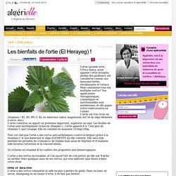 Les bienfaits de l'ortie (El Herayeg) ! - Santé pratique - algerielle