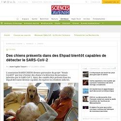Ehpad : des chiens bientôt capables de détecter le Covid-19