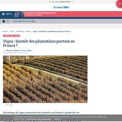 Vigne : bientôt des plantations partout en France ?