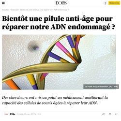 Bientôt une pilule anti-âge pour réparer notre ADN endommagé ?