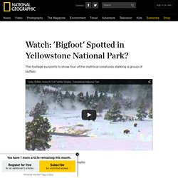 Watch: 'Bigfoot' Spotted in Yellowstone National Park?