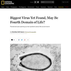 Biggest Virus Yet Found, May Be Fourth Domain of Life?