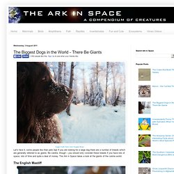 The Ark In Space: The Biggest Dogs in the World - There Be Giants
