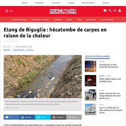 Etang de Biguglia : hécatombe de carpes en raison de la chaleur