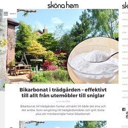 Bikarbonat i trädgården – effektivt till allt från utemöbler till sniglar – S...
